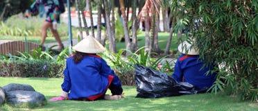 Träd i stad Fåfänga fåfänga Gröna Vietnam royaltyfri fotografi