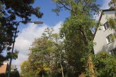 Träd i staden Arkivfoton