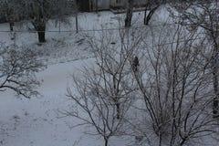 Träd i staden i snön kommet har vinter Snö avverkar vägen ligger sovande på de elektriska trådarna Arkivbild