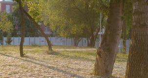 Träd i staden på solnedgången stock video