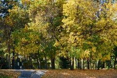Träd i staden parkerar, Kasakhstan royaltyfria foton