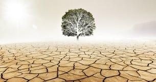 Träd i torr öken arkivbilder