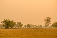 Träd i torr säsong av Thailand Arkivfoton