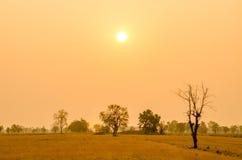 Träd i torr säsong på soluppgångbakgrund i Thailand Arkivbild
