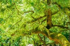 Träd i trädgård Arkivfoto
