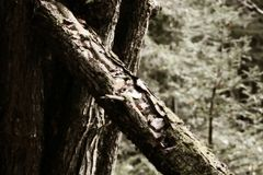 Träd i trän Arkivbilder