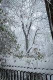 Träd i tungt snöfall arkivfoto