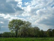 Träd i vår på lägre rhine område Arkivfoto