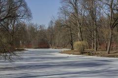 Träd i vår parkerar tänt av aftonsolen royaltyfri bild