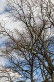 Träd i vårhorisont Royaltyfria Foton