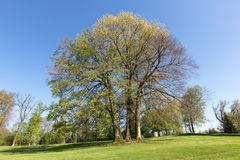 Träd i vårtid Royaltyfria Bilder