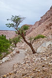 Träd i vagga Royaltyfri Fotografi