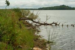 Träd i vattnet längs lakeshore arkivfoton
