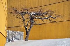 Träd i vinter bland gula hus Royaltyfria Foton