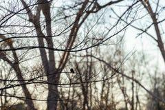 Träd i vinter med en fågel royaltyfria bilder