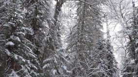 Träd i vinter med fallande snö arkivfilmer