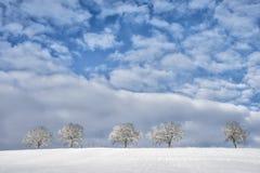 Träd i vinterlandskap 11 Arkivbild