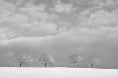 Träd i vinterlandskap 12 Arkivfoto