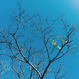 Träd i vintermorgon Royaltyfri Bild
