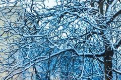 Träd i vintern, filialer som täckas med snow_ Royaltyfri Foto