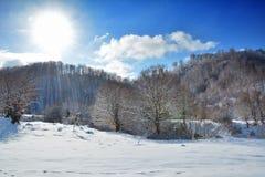 Träd i vintern Rumänien Royaltyfri Foto
