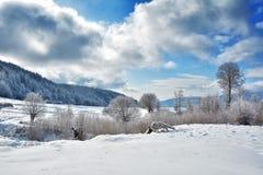 Träd i vintern Rumänien Royaltyfri Fotografi