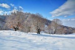 Träd i vintern Rumänien Arkivfoton