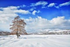 Träd i vintern Rumänien Royaltyfria Foton