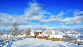 Träd i vintern Rumänien Arkivfoto