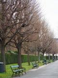 Träd i vintersäsongerna är fridsamma parkerar Arkivfoton