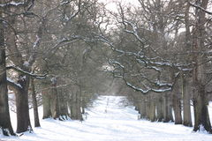 Träd i vintersnön på Levens parkerar, Cumbria royaltyfri fotografi