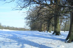 Träd i vintersnön på Levens parkerar, Cumbria royaltyfri bild