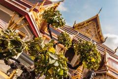 Träd i Wat Phra Kaew Arkivbild