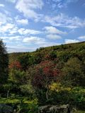 Träd i Yorkshire Arkivbilder