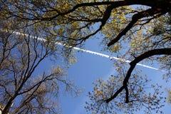 Träd i Yosemite Royaltyfri Bild