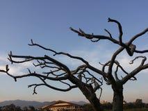 Träd inga tjänstledigheter Fotografering för Bildbyråer