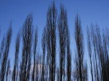Träd inget blad Royaltyfri Foto