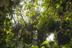 Träd inom ett övergett hus nytt hemliv Liv segrar alltid royaltyfria bilder