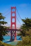 Träd inramar Golden gate bridge Arkivbild