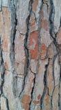 Träd Italien Royaltyfria Bilder
