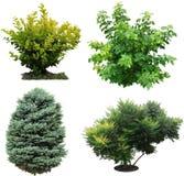 Träd izolated buskar arkivbilder