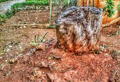 Träd klippt gammal stam Royaltyfri Fotografi