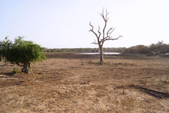 Träd krona, skog Arkivbilder