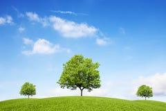 Träd, kullar och fantastisk himmel royaltyfria bilder