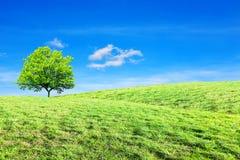 Träd kulle, ekologibegrepp arkivbilder