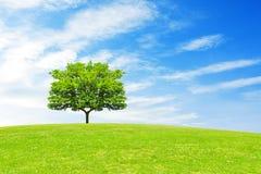 Träd, kulle och blå himmel Royaltyfria Bilder