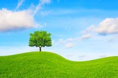 Träd, kulle och blå himmel Arkivfoton
