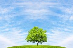 Träd, kulle och fantastisk himmel arkivfoto