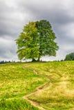 Träd, kulle och himmel royaltyfri fotografi