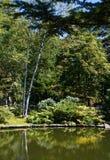 Träd längs dammet i trädgård Royaltyfri Fotografi